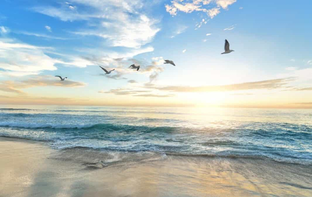 Flying birds over blue sky at the beach
